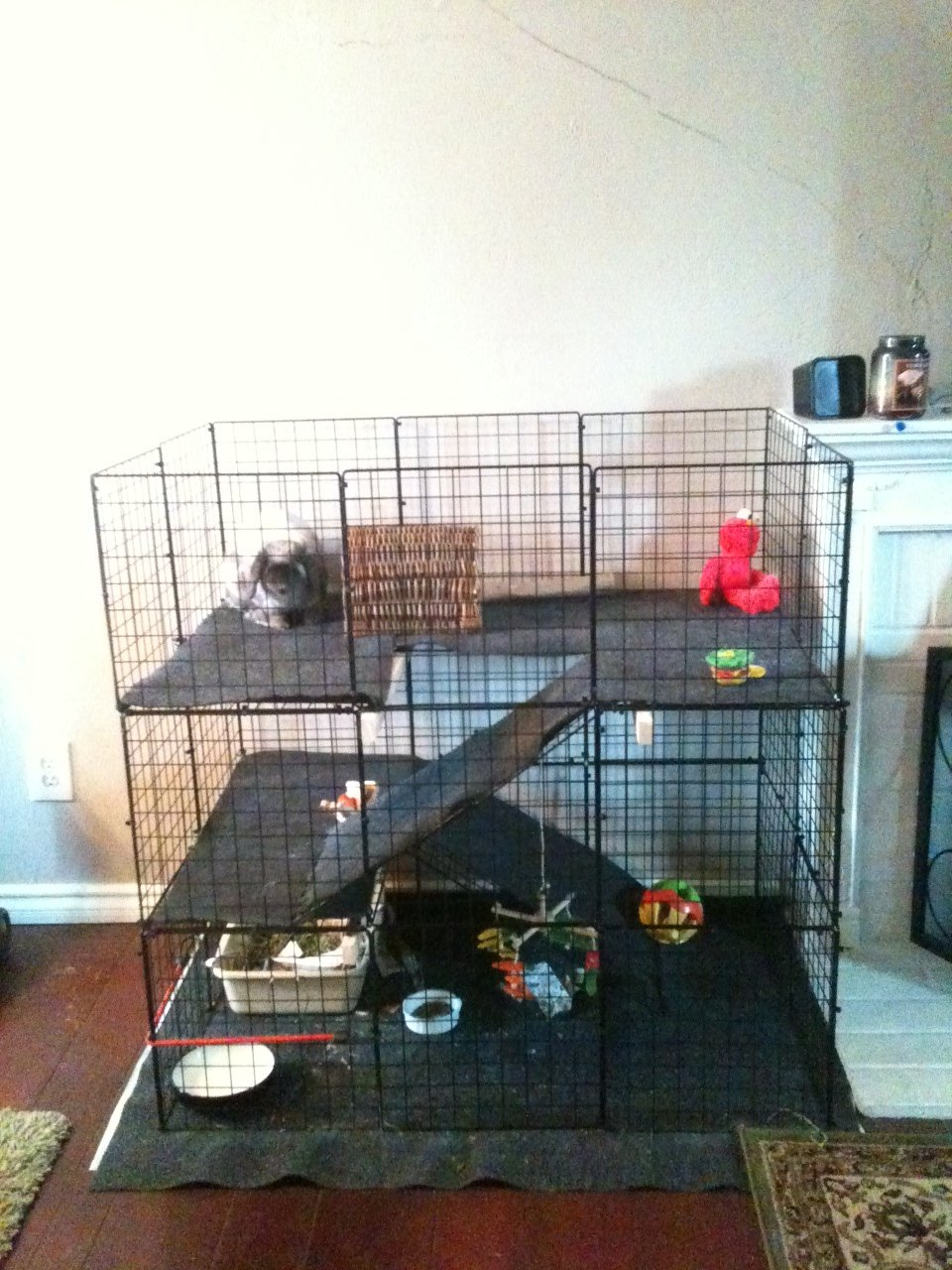 Cavy Condo 4 Guinea Pig Cage Photos........click